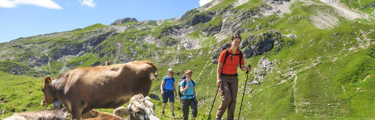 Bergwanderer unterwegs in den Allgäuer Bergen laufen vorbei an Kühen © Alexander Rochau