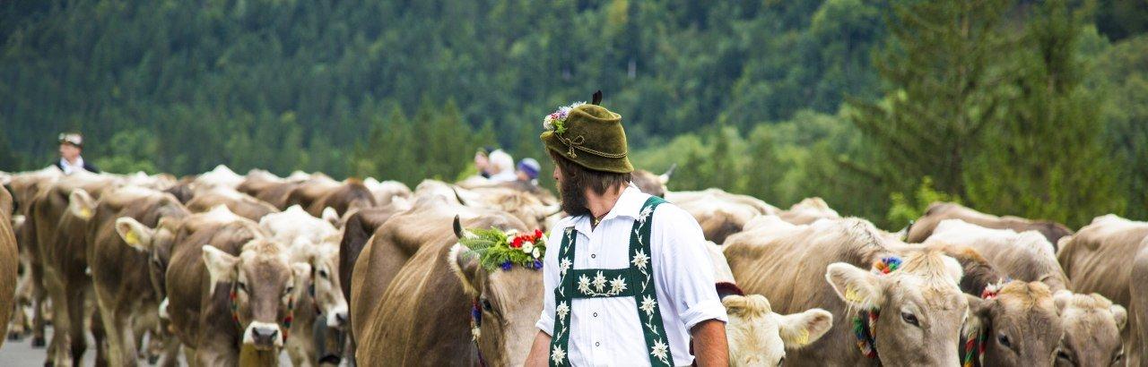 Almabtrieb im Oberallgäu © Dominic Ultes