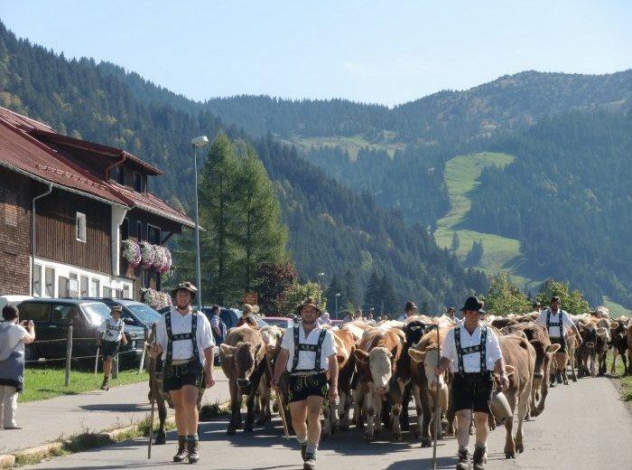 Viehscheid in Balderschwang © Tourismus Hörnerdörfer