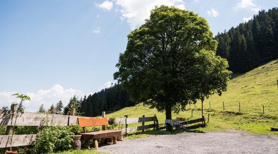Die Herzberg Alpe liegt auf 1.200 m Höhe © Tourismus Hörnerdörfer, F. Kjer