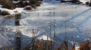 Eislandschaft im Werdensteiner Moos