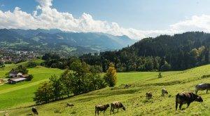 Landschaftsaufnahme mit mehreren Kühen, © Dominik Luschtenetz im Auftrag AGT