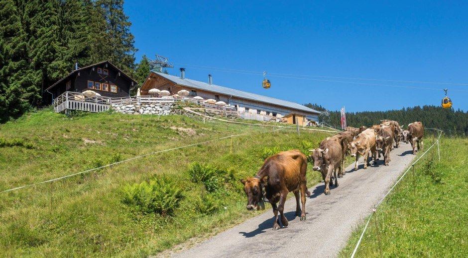 Sennalpe Ornach - Bolsterlang © Tourismus Hörnerdörfer