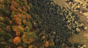 Bild24_Wald von oben_Konrad Zettler, © Naturpark Nagelfluhkette