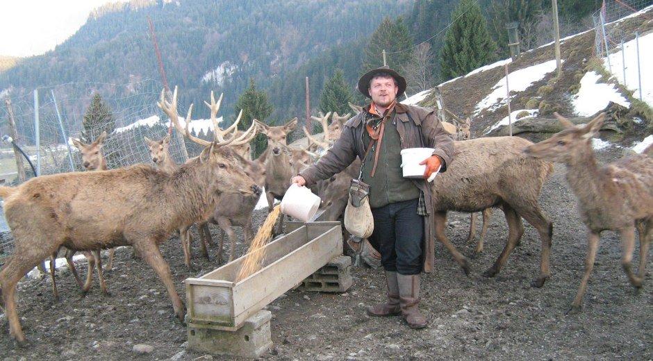 Alpenwildpark in Obermaiselstein - Fütterung © Tourismus Hörnerdörfer