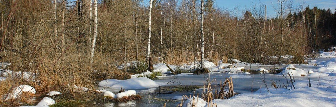 Winter im Werdensteiner Moos
