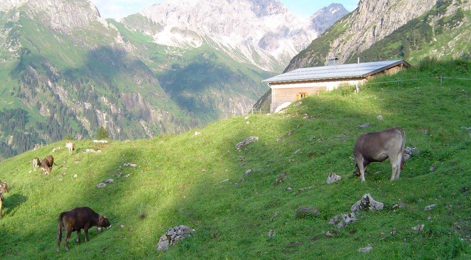 Allgäuer Alpgenuss Alpe © Allgäuer Alpgenuss e.V.