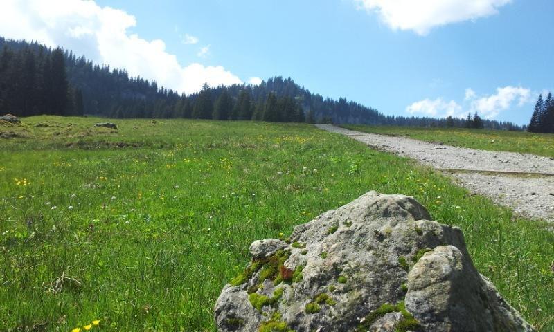 Weg zum Scheuenwasserfall in Balderschwang © Tourismus Hörnerdörfer, S. Pflederer